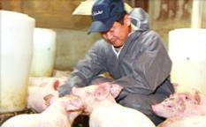 (유)번영식품농축산회사법인